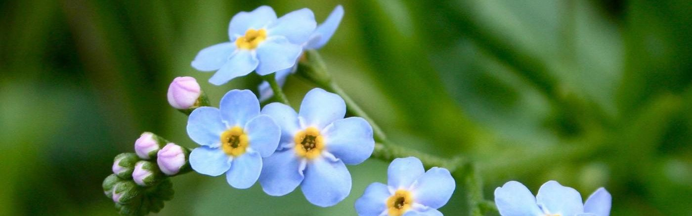 Forget Me Not Funeral Ceremonies